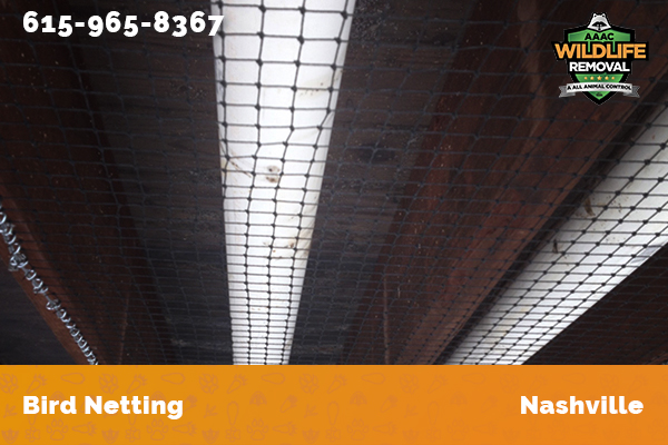 Bird netting installed in a commercial building in Nashville