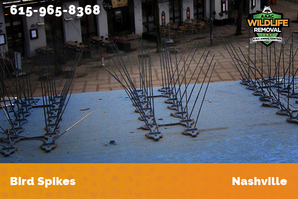 Bird Spikes installed on a commercial building in Nashville