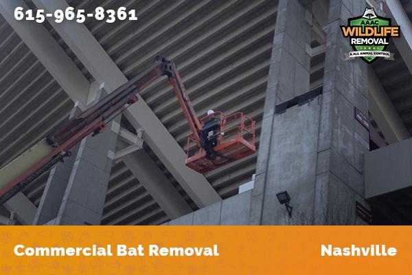 Wildlife Control Operator handling a bat removal job in Nashville