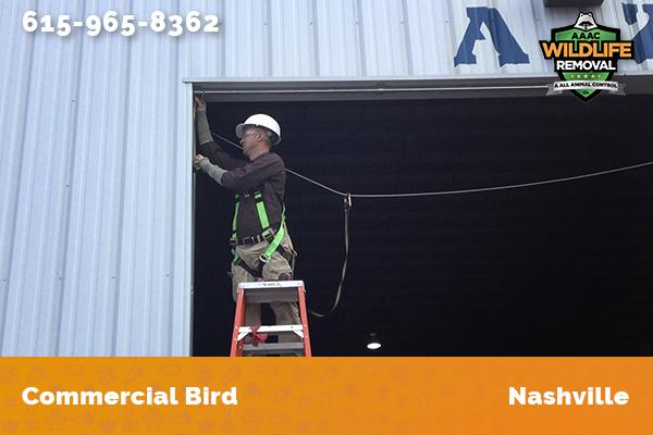 Wildlife Control Operator handling a bird removal job in Nashville
