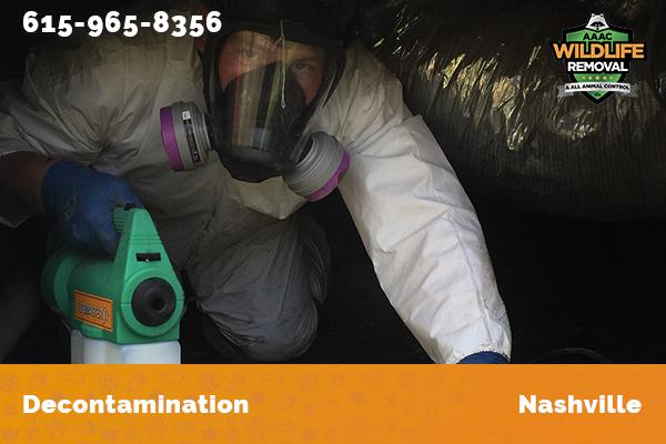 Nuisance Wildlife Operator decontaminating an attic in Nashville