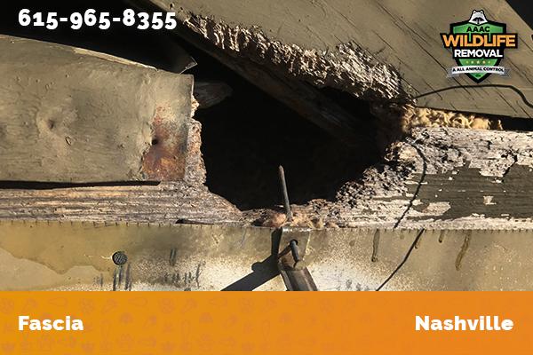 damage to home fascia in Nashville